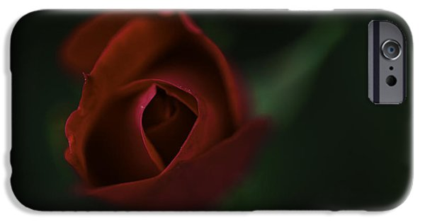 Puppy Love Framed Prints iPhone Cases - Puppy Love iPhone Case by Charles Forde