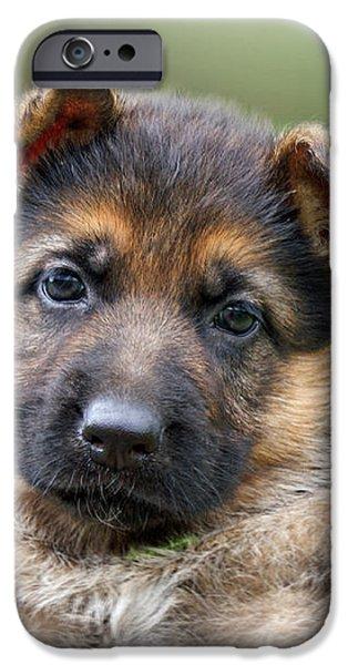 Puppy Portrait iPhone Case by Sandy Keeton
