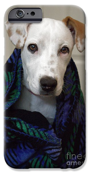 Cute Puppy iPhone Cases - Puppy Wrapped in Blanket iPhone Case by Ella Kaye Dickey