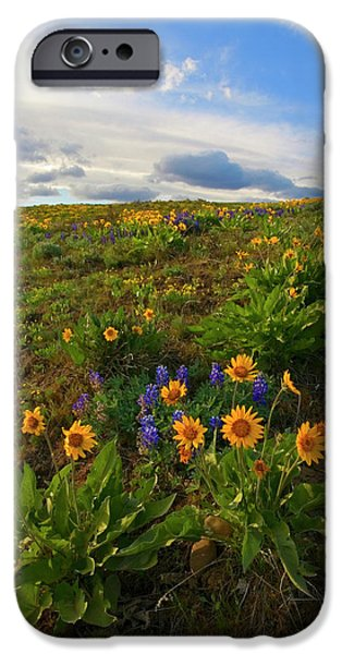 Yakima Valley iPhone Cases - Purple and  Gold iPhone Case by Mike  Dawson