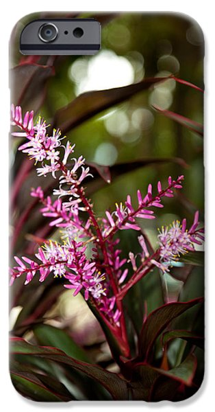 Close Up Floral iPhone Cases - Purple Bliss iPhone Case by Michelle Wiarda