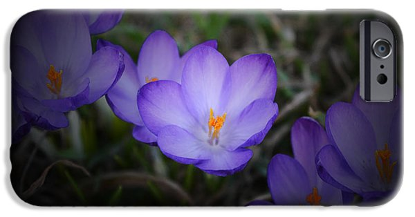 Snow iPhone Cases - Purple Crocuses - 2015 C iPhone Case by Richard Andrews