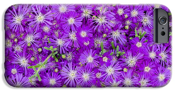 Pinkish iPhone Cases - Purple Flowers iPhone Case by Frank Tschakert