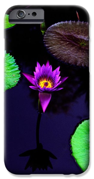 Floral Photographs iPhone Cases - Purple Lily iPhone Case by Gary Dean Mercer Clark