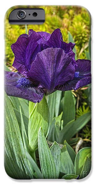 Flora iPhone Cases - Purple Passion iPhone Case by ArtissiMo Photography
