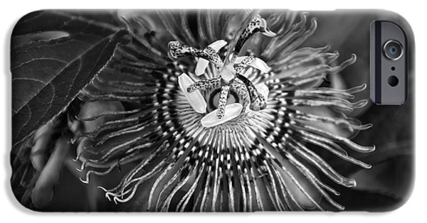 Passionflower iPhone Cases - Purple Passionflower BW iPhone Case by Chris Flees