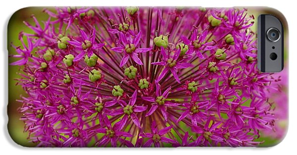 Purple Sensation iPhone Cases - Purple Sensation Flower In Bloom iPhone Case by James DeFazio