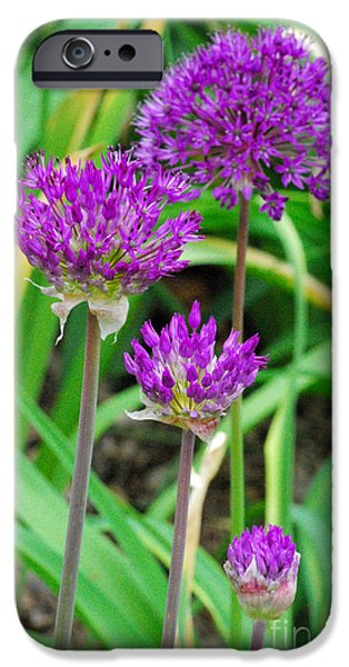Allium Hollandicum iPhone Cases - Purple Sensation iPhone Case by Nancy Mueller