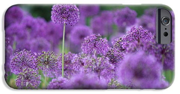 Allium Hollandicum iPhone Cases - Purple Sensations iPhone Case by Nicholas Miller