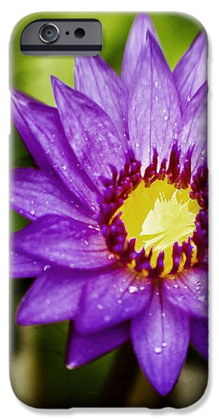 Purple Sunrise iPhone Case by Scott Pellegrin