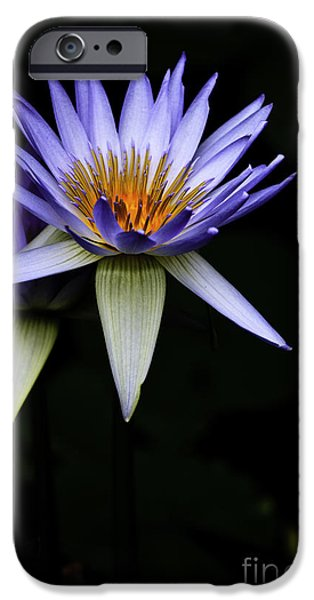 Flora iPhone Cases - Purple waterlily iPhone Case by Avalon Fine Art Photography