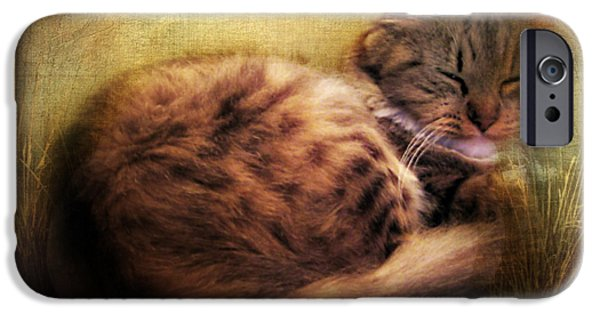 Ears Digital iPhone Cases - Purrfectly Content iPhone Case by Jessica Jenney
