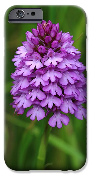 Plant iPhone Cases - Pyramidal Orchid iPhone Case by Rumyana Whitcher