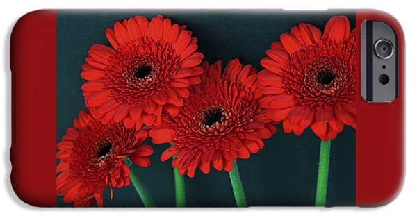 Ruby Garden Jewel iPhone Cases - Quadruple Ruby Gerbera Daisies iPhone Case by Tammy Pool