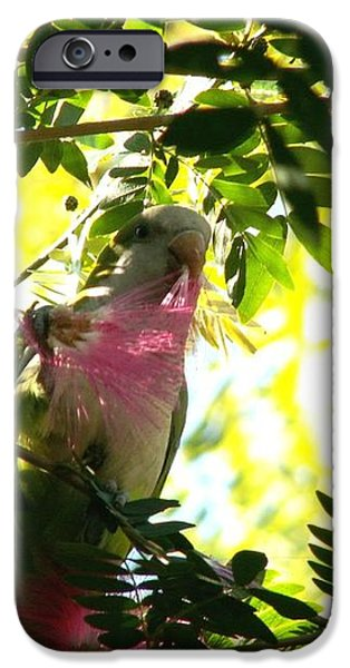 Quaker Parrot with Mimosa Flower iPhone Case by Theresa Willingham