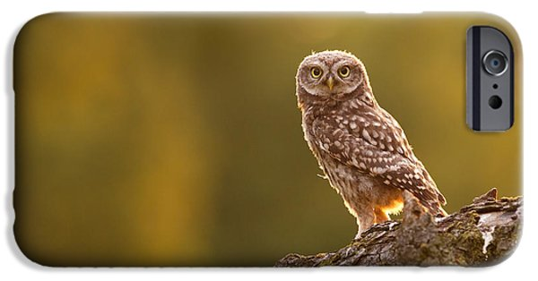 Juveniles iPhone Cases - Qui, moi? Little Owlet in Warm Light iPhone Case by Roeselien Raimond