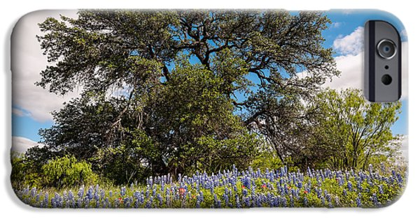 Meadow Photographs iPhone Cases - Quintessential Texas Hill Country County Road Bluebonnets and Oak - Llano iPhone Case by Silvio Ligutti