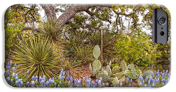 Oak Creek iPhone Cases - Quintessential Texas Hill Country - Yucca Prickly Pear and Bluebonnets - Willow City Loop  iPhone Case by Silvio Ligutti