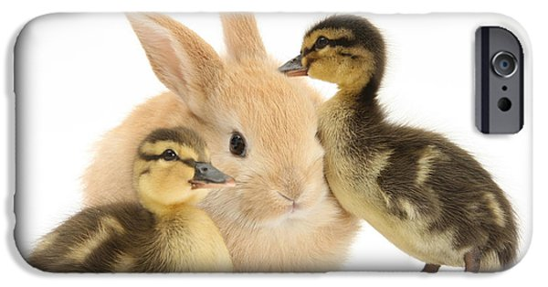 House Pet iPhone Cases - Rabbit And Ducklings iPhone Case by Mark Taylor