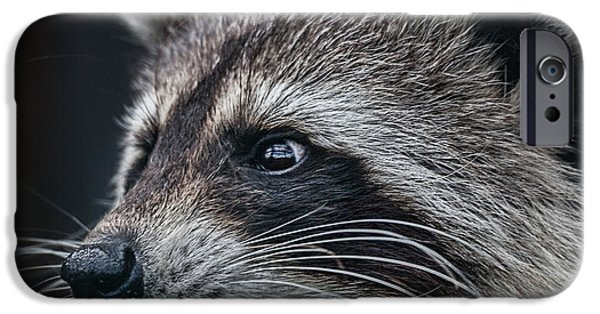 Cut-outs iPhone Cases - Racoon iPhone Case by Shaun Wilkinson