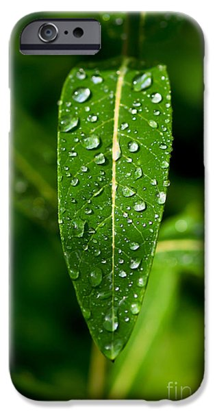 Leaves iPhone Cases - Rain drops on Leaves #2 iPhone Case by Kerri Farley