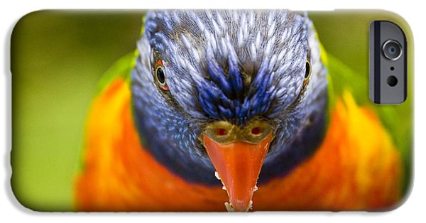 Animals Photographs iPhone Cases - Rainbow lorikeet iPhone Case by Sheila Smart