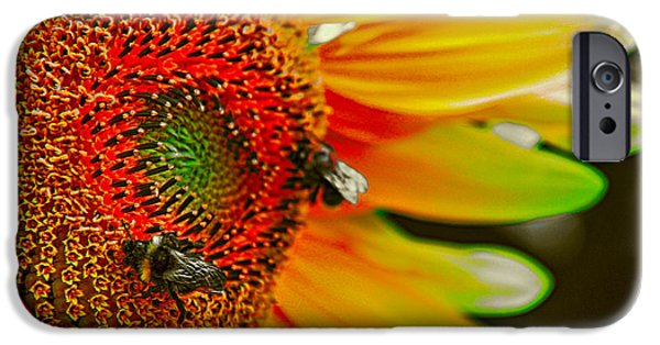 Fauna iPhone Cases - Rainbow Sunflower iPhone Case by Mariola Bitner