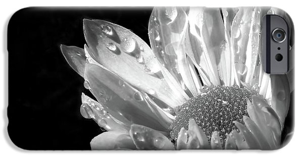 Monotone Photographs iPhone Cases - Raindrops on Daisy Black and White iPhone Case by Jennie Marie Schell