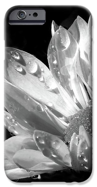 Raindrops on Daisy Black and White iPhone Case by Jennie Marie Schell