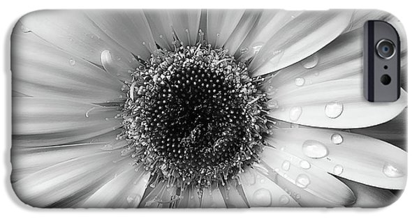 Monotone iPhone Cases - Raindrops on Gerber Daisy Black and White iPhone Case by Jennie Marie Schell