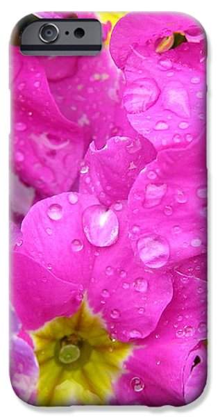 Raindrops on Pink Flowers 2 iPhone Case by Carol Groenen