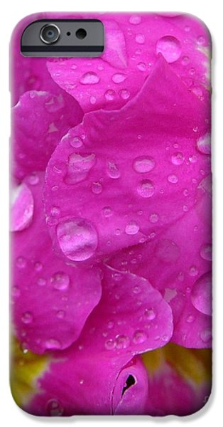 Raindrops on Pink Flowers iPhone Case by Carol Groenen