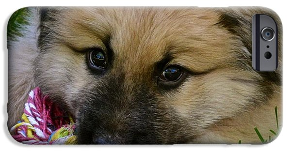 Puppies iPhone Cases - Rainier iPhone Case by Lisa  Telquist