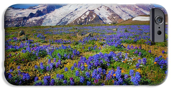 Flora Photographs iPhone Cases - Rainier Lupines iPhone Case by Inge Johnsson