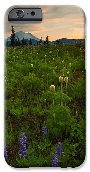 Meadow Photographs iPhone Cases - Rainier Wildflower Light iPhone Case by Mike  Dawson