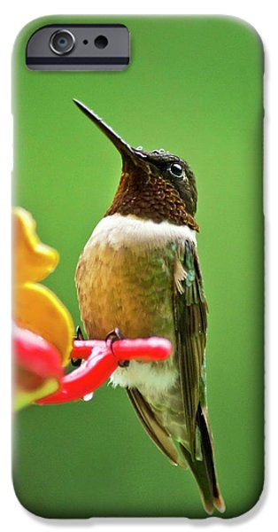Archilochus Colubris iPhone Cases - Rainy Day Hummingbird iPhone Case by Christina Rollo