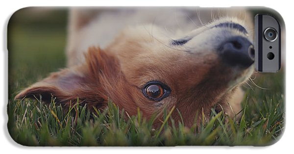 Dog Close-up iPhone Cases - Randy  iPhone Case by Brian Cross