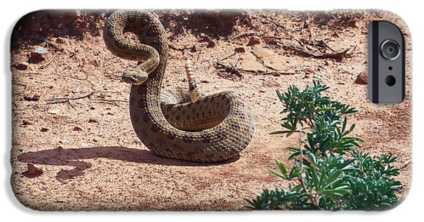 Serpent iPhone Cases - Rattlesnake Ready to Strike iPhone Case by Nps