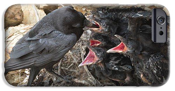 Crows iPhone Cases - Raven Babies Breakfast iPhone Case by Kathleen Bishop