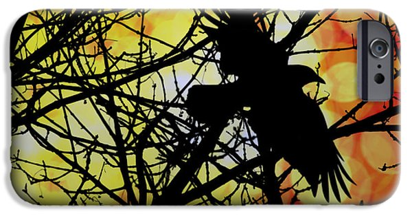 Crows iPhone Cases - Raven iPhone Case by Bob Orsillo