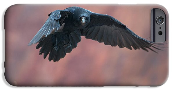 Crows iPhone Cases - Raven flying with red rocks in background iPhone Case by Sergey Ryzhkov