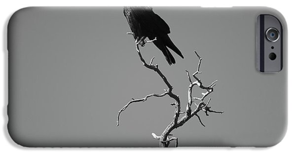Grand Canyon iPhone Cases - Raven III iPhone Case by David Gordon