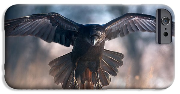 Crows iPhone Cases - Raven in flight iPhone Case by Sergey Ryzhkov
