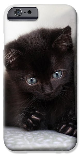 Pictures Of Cats Photographs iPhone Cases - Rawr iPhone Case by Amy Tyler