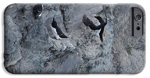 Razorbill iPhone Cases - Razorbill Landing iPhone Case by John Meader