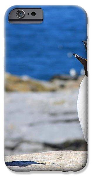 Razorbills Calling on Island iPhone Case by John Burk