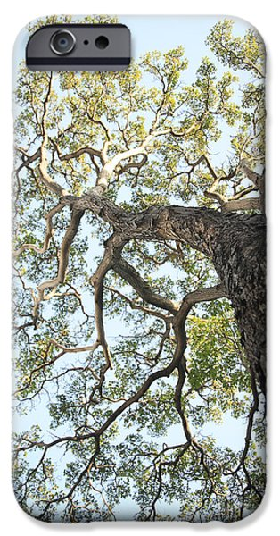 Reaching for the Sky iPhone Case by Brandon Tabiolo - Printscapes