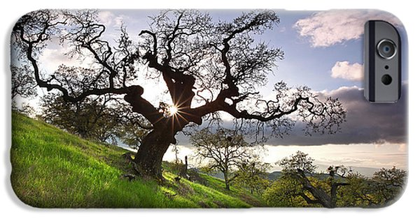 Recently Sold -  - Creek iPhone Cases - Reaching shadow through Dragon Oak Mt Diablo State Park California 2014 iPhone Case by Benjamin Race - Arc of Light Photography