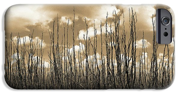 Everglades iPhone Cases - Reaching To the Sky iPhone Case by Gary Dean Mercer Clark