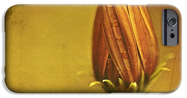 Daisy Bud iPhone Cases - Recollection iPhone Case by Bonnie Bruno